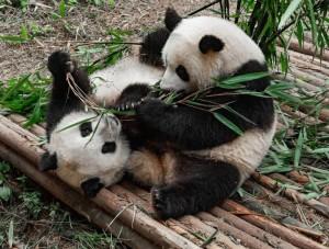 guide-pandas-14-768x580