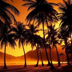 ce64a410a6_palm-tree